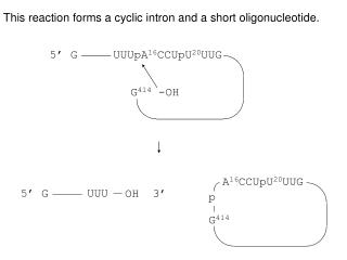 This reaction forms a cyclic intron and a short oligonucleotide.