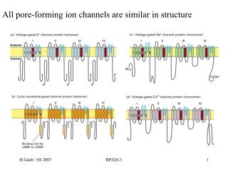 All pore-forming ion channels are similar in structure