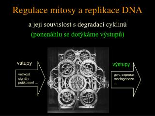 Regulace mitosy a replikace DNA