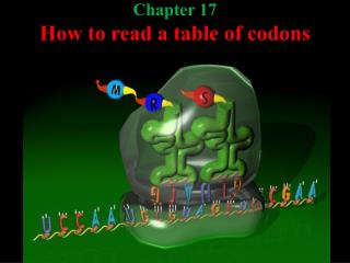 Chapter 17 How to read a table of codons
