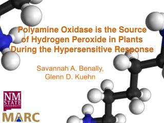Polyamine Oxidase is the Source  of Hydrogen Peroxide in Plants During the Hypersensitive Response