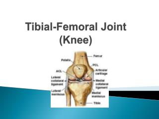 Tibial -Femoral Joint (Knee)