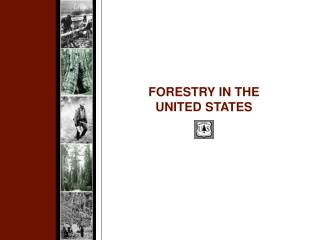 FORESTRY IN THE UNITED STATES