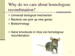 Why do we care about homologous recombination?
