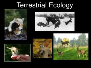 Terrestrial Ecology