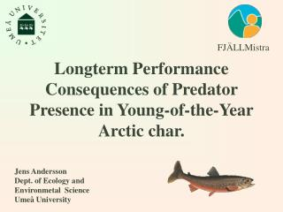 Longterm P erformance Consequences of  Predator Presence in Young-of-the-Year Arctic char.
