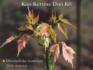 Kiss Kert sz Du  Kft