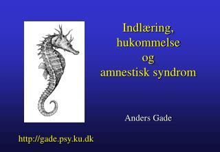 Indl�ring, hukommelse og amnestisk syndrom Anders Gade