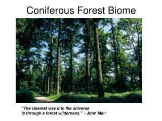 Coniferous Forest Biome