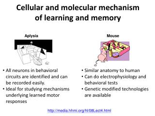 Cellular and molecular mechanism of learning and memory