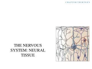 THE NERVOUS SYSTEM: NEURAL TISSUE