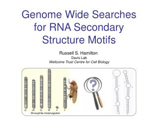 Genome Wide Searches for RNA Secondary Structure Motifs