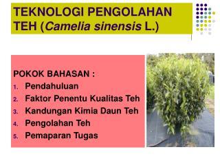 TEKNOLOGI PENGOLAHAN TEH ( Camelia sinensis  L.)