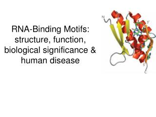 RNA-Binding Motifs: structure, function, biological significance &   human disease
