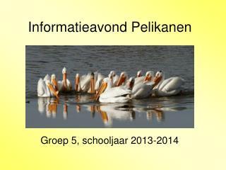 Informatieavond Pelikanen