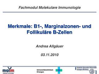 Merkmale: B1-, Marginalzonen- und Follikuläre B-Zellen Andrea Allgäuer 03.11.2010