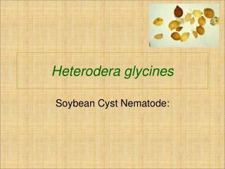 Heterodera glycines