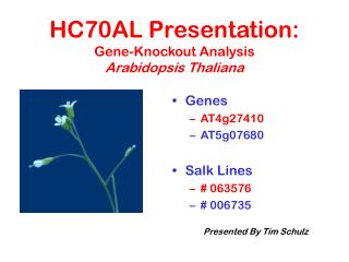 HC70AL Presentation: Gene-Knockout Analysis Arabidopsis Thaliana