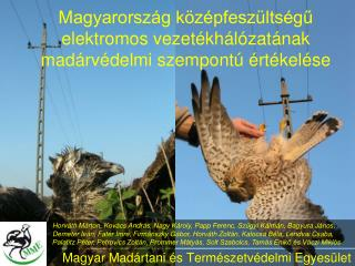 Magyarország középfeszültségű elektromos vezetékhálózatának madárvédelmi szempontú értékelése