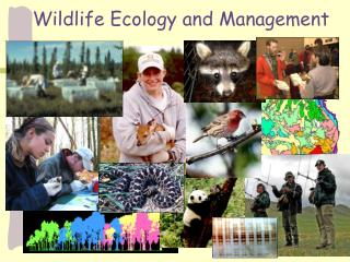 Wildlife Ecology and Management