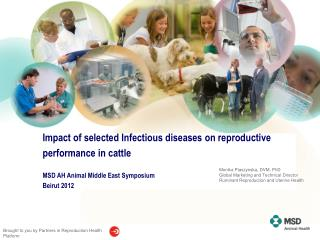 Impact of selected Infectious diseases on reproductive performance in cattle