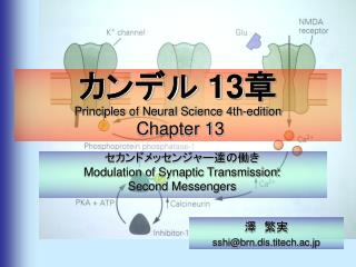 カンデル  13 章 Principles of Neural Science 4th-edition  Chapter 13