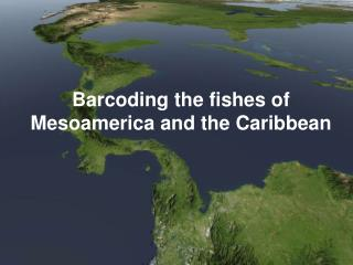 Barcoding the fishes of Mesoamerica and the Caribbean