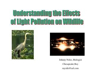 Understanding the Effects of Light Pollution on Wildlife