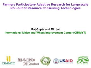 Raj Gupta and ML Jat International Maize and Wheat Improvement Center (CIMMYT)