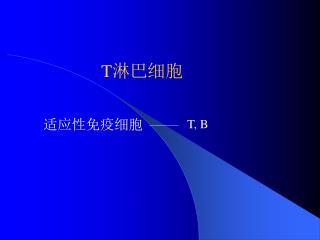 T 淋巴细胞