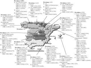Prevalence:  0.92% C. koseri:  3/34 (8.8%) DHA-1 2 (0.06%); ACC-1 + ACT-2 1 (0.03%)