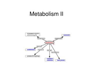 Metabolism II