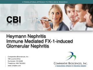 CBI Heymann Nephritis Immune Mediated  FX-1-induced  Glomerular Nephritis