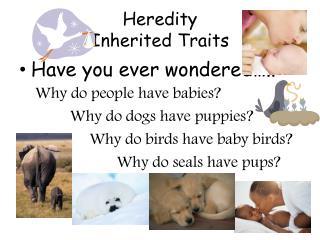 Heredity Inherited Traits