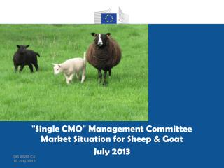 """Single CMO"" Management Committee Market Situation  for Sheep & Goat July 2013"