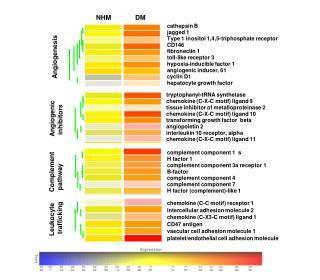 cathepsin B jagged 1 Type 1 inositol 1,4,5-triphosphate receptor CD146 fibronectin 1