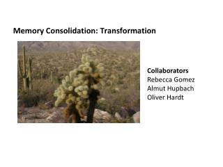 Memory Consolidation: Transformation