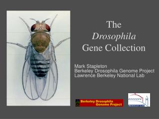 The Drosophila Gene Collection