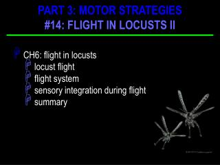 CH6: flight in locusts  locust flight  flight system  sensory integration during flight  summary