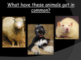 What have these animals got in common?