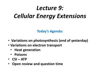 Today's Agenda:  Variations on photosynthesis (end of yesterday) Variations on electron transport