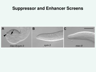 Suppressor and Enhancer Screens
