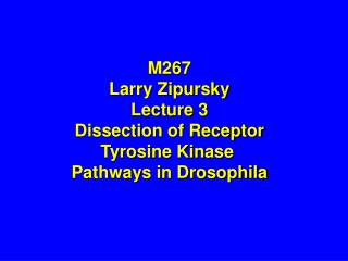 M267 Larry Zipursky Lecture 3 Dissection of Receptor Tyrosine Kinase  Pathways in Drosophila