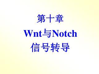 第十章 Wnt 与 Notch 信号转导