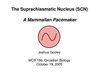 The Suprachiasmatic Nucleus (SCN) A Mammalian Pacemaker