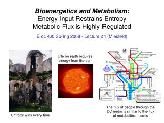 Bioenergetics and Metabolism: Energy Input Restrains Entropy  Metabolic Flux is Highly-Regulated