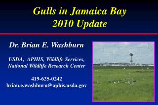 Gulls in Jamaica Bay  2010 Update