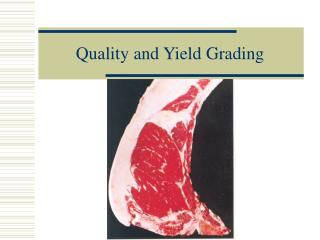 Quality and Yield Grading