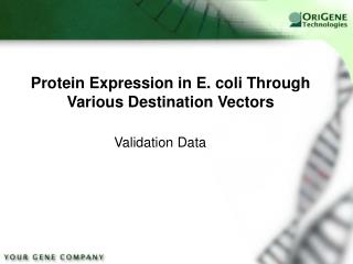 Protein Expression in E. coli Through Various Destination Vectors