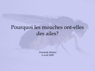Pourquoi les mouches ont-elles des ailes?